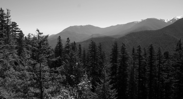 View to the top of Hurrican Ridge